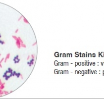 Grams Stain-Kit